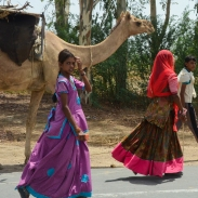 The camel caravan consisted of a dozen camels or so, led by young women. Little kids road the camels.